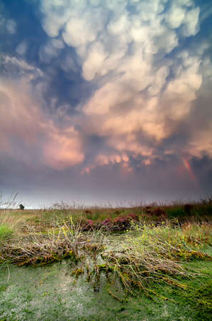 lenticular: lenticular clouds during storm over bog at sunset, Fochteloerveen, Netherlands