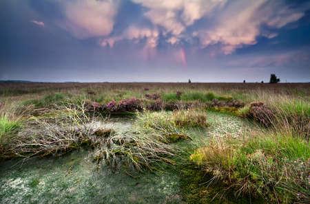 lenticular: lenticular clouds after storm over bog at sunset