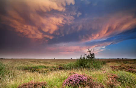 lenticular: dramatic lenticular clouds over heathland at sunset