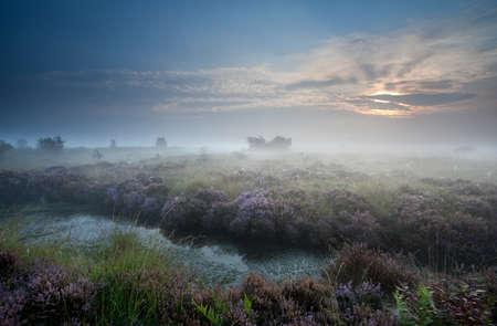 misty sunrise over swamp with flowering heather, Fochteloerveen, Netherlands