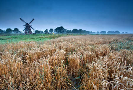 wheat field and windmillin summer morning, Groningen, Holland photo