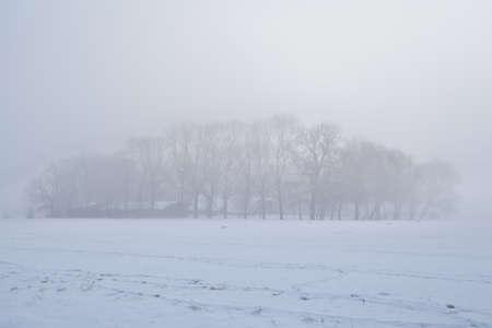 groningen: trees in dense winter fog, Groningen, Netherlands