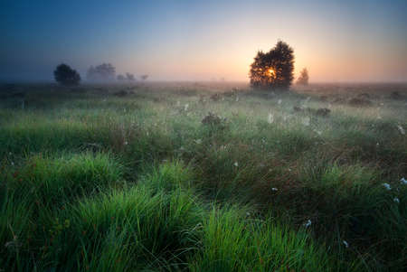 foggy sunrise over marsh with spidernets ans cotton-grass Stockfoto