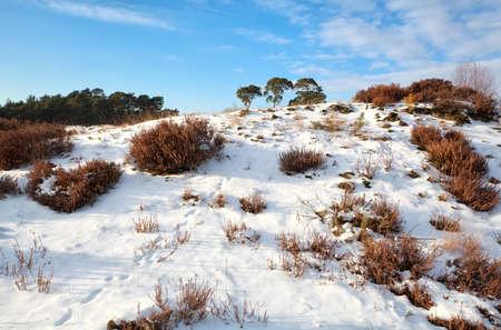 animal tracks on snowy hill during sunny day, Nunspeet, Gelderland, Netherlands