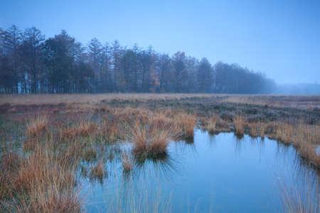 autumn misty fog over swamp, Duurswoudeheide, Friesland, Netherlands
