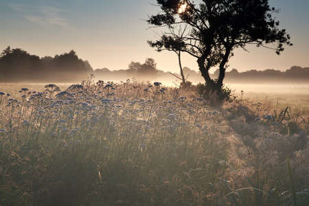 beautiful summer misty sunrise on meadow photo