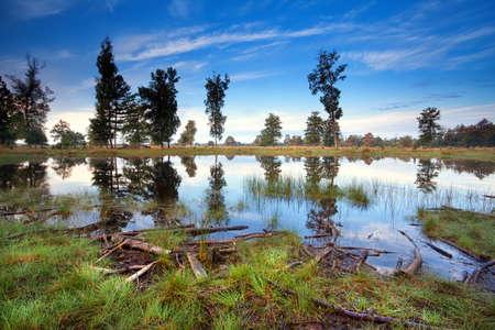 little wild lake in morning, Drents-Friese wold, Drenthe, Friesland, Netherlands Stock Photo