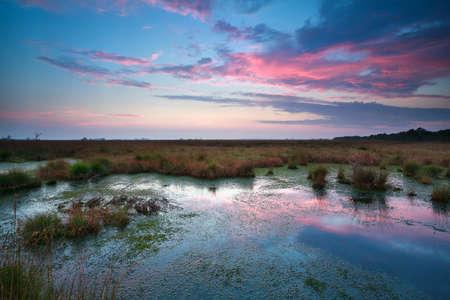 sunset sky over bog in summer, Fochteloerveen, Drenthe, Netherlands photo