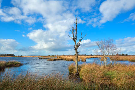 dead tree on bog over blue sky, Dwingelderveld, Drenthe, Netherlands photo
