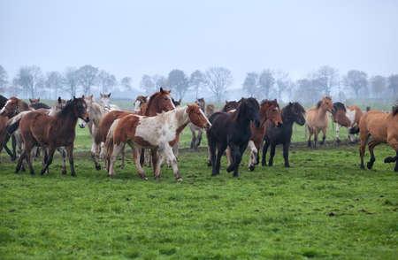 horses herd on misty pasture outdoors Banco de Imagens