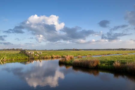 Schafe auf der Weide am Fluss, Groningen, Niederlande