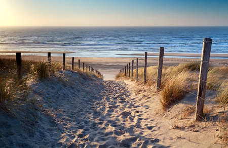 netherland: path to North sea beach in gold sunset sunshine, North Holland, Netherlands
