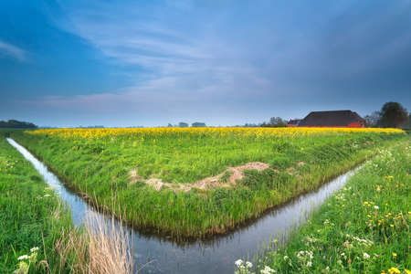 river and rapeseed flowers on Dutch farmland, Netherlands photo