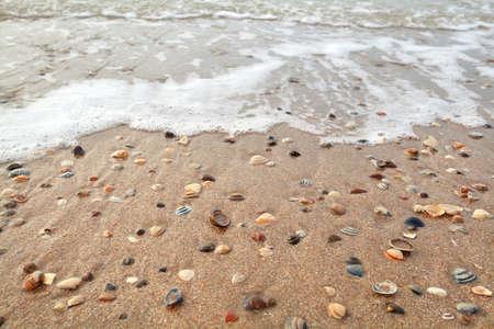 mollusc: mollusc shell on sand beach and sea waves Stock Photo
