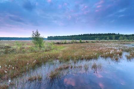 Sonnenaufgang �ber Sumpf mit wilden Wollgras, Drenthe, Niederlande