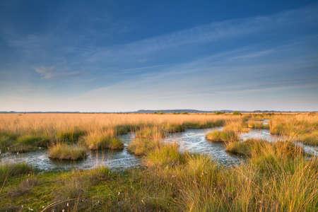 gold sunshine over swamp, Friesland, Netherlands
