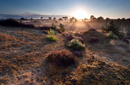 sunrise over heather meadows in summer morning photo