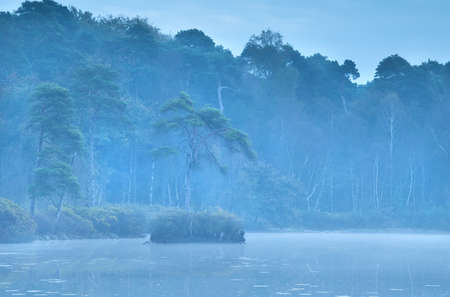 noord brabant: coniferous forest and lake in dusk autumn fog Stock Photo