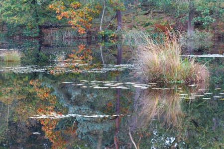noord: wild forest lake in autumn season, Noord Brabant, Netherlands