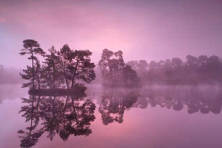 noord brabant: purple misty sunrise over wild lake in forest, Noord Brabant, Netherlands