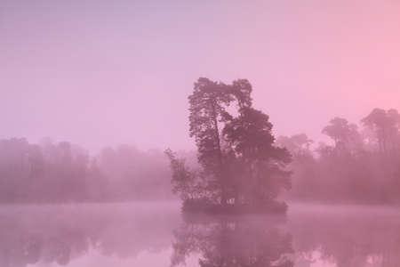 noord: tree island on lake in sunrise fog, Noord Brabant, Netherlands Stock Photo