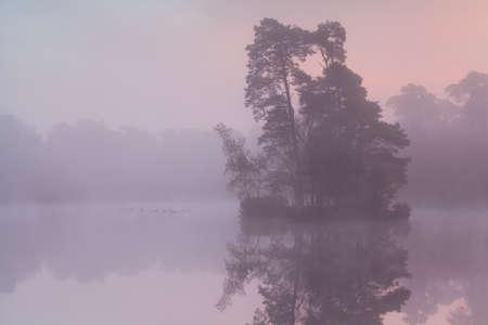 misty sunrise on forest lake with birds, North Brabant, Netherlands photo