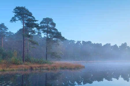 north brabant: coniferous forest at wild lake after sunset, North Brabant, Netherlands