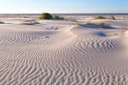 sand pattern on coastal dune, North sea, Netherlands