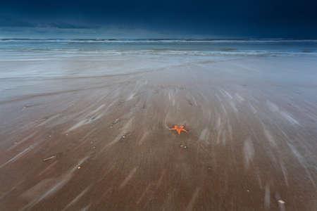 north star: sea star on sand beach of North sea, Netherlands