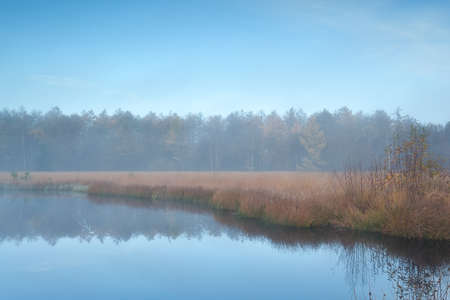 friesland: forest lake in autumn misty morning, Friesland, Netherlands Stock Photo