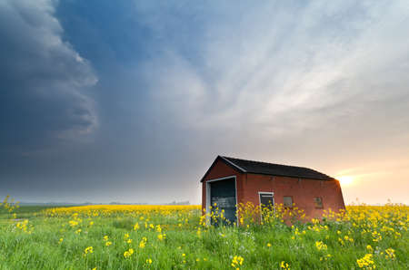 farmhouse on rapeseed field at sunset, Holland photo
