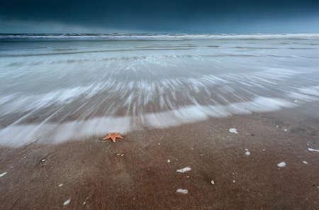 sea star: sea star on North sea coast at storm Netherlands