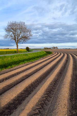 plowed: plowed field in spring, Groningen, Netherlands Stock Photo