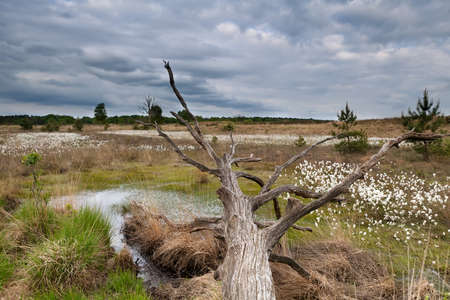 clouded: old tree trunk on swamp in clouded day Stock Photo