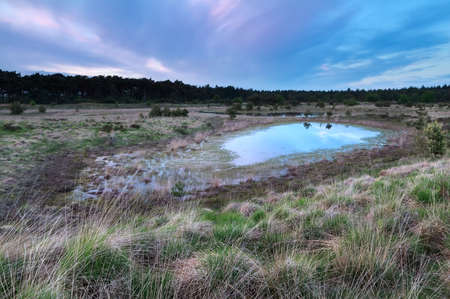 north brabant: sunset over meadows and little lake, Kampina, North Brabant, Netherlands