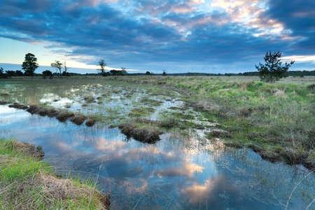 morning sky: morning sky reflected in swamp water, Kampina, Netherlands
