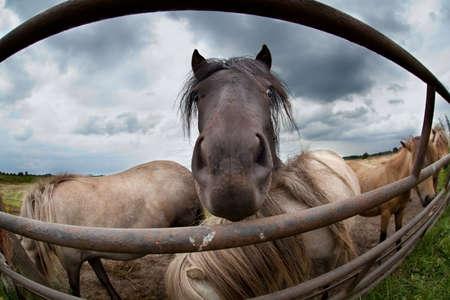 funy: funy pony muzzle close up outdoors Stock Photo