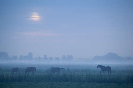 horse silhouette on pasture in dusk Stock Photo