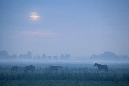 horse silhouette on pasture in dusk Banco de Imagens