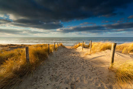 sand path to North sea beach in sunlight, Holland