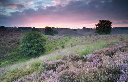 posbank: beautiful sunrise over hills with flowering purple heather Stock Photo