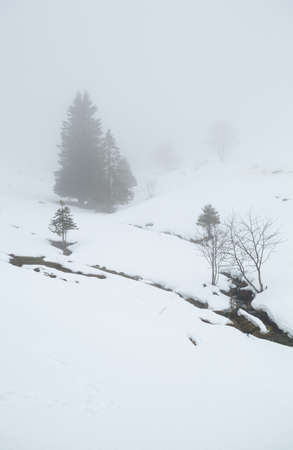 sleet: winter weather in mountains with sleet, Baden-Wurttemberg, Germany
