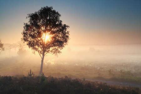 noord: sunshine through tree during misty morning, Noorth Bradant, Netherlands Stock Photo