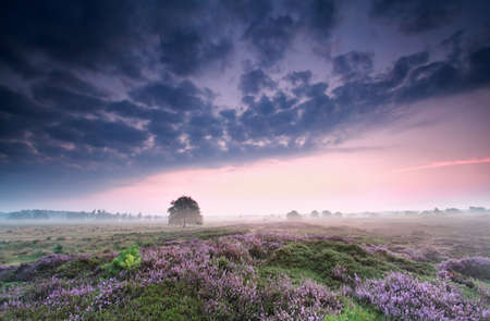 the netherlands: cloudy sunrise over heathland, Drenthe, Netherlands Stock Photo