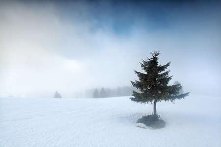 baden wurttemberg: spruce tree on snowy mountain top in fog, Germany