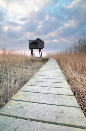 observation: wooden path to observation tower, Netherlands Stock Photo