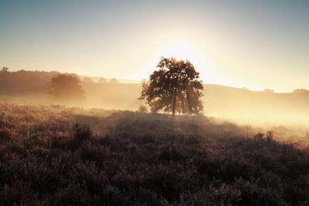 heathland: beautiful misty sunrise on heathland in summer