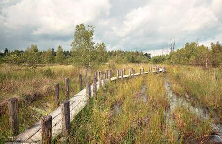 夏、ドレンテ、オランダの沼地に木製の道 写真素材