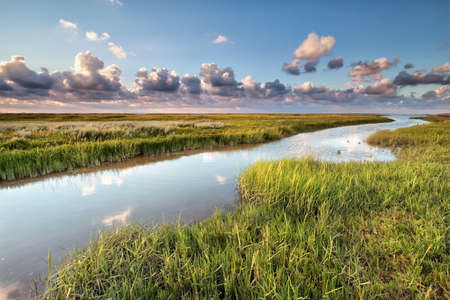 the wadden sea: Wadden sea coast by Moddergat, Netherlands