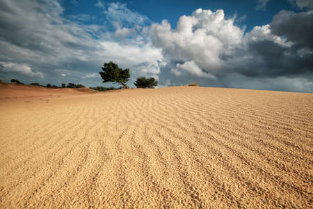 sand wave texture on dune and beautiful sky, Netherlands Stock Photo